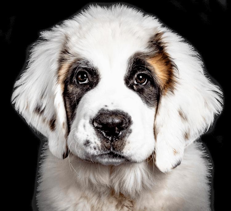 Bone Biscuit Real Pets Real Food Real Healthy