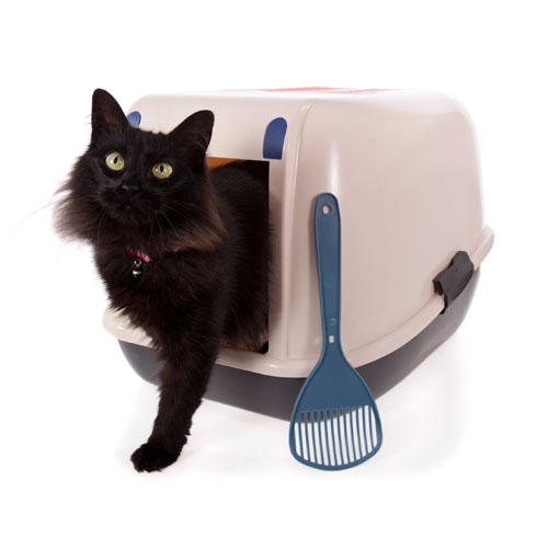 Wet Near Cat Litter Box