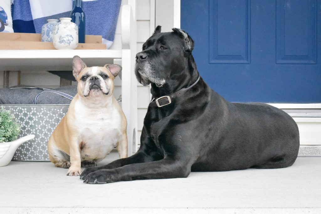 Toro and Babe