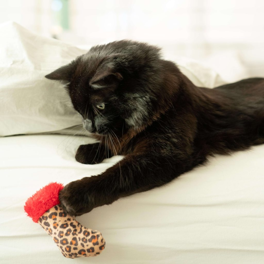 Black cat on white couch holds a Huxley & Kent leopard print cat toy in its paw
