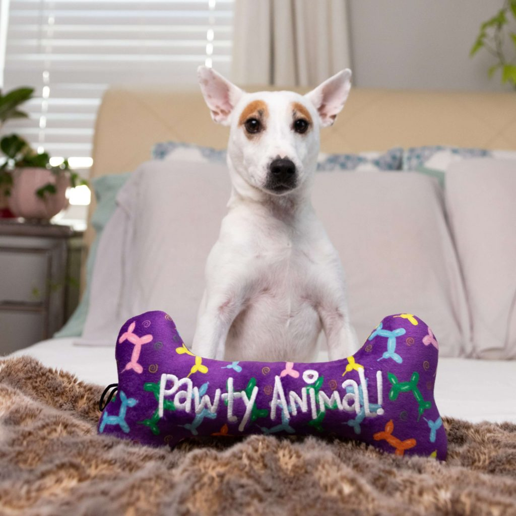 White dog with pointy ears with a large purple Huxley & Kent dog toy shaped as a bone that says 'Pawty Animal' on the front
