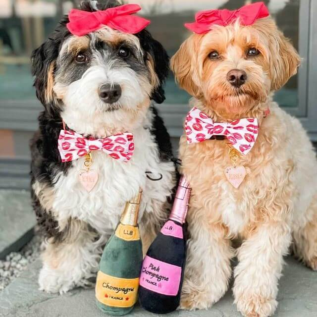 Two dogs sit wearing pink Huxley & Kent bows on their heads, with pink bowties on and dog toys shaped like bottles of champagne at their feet