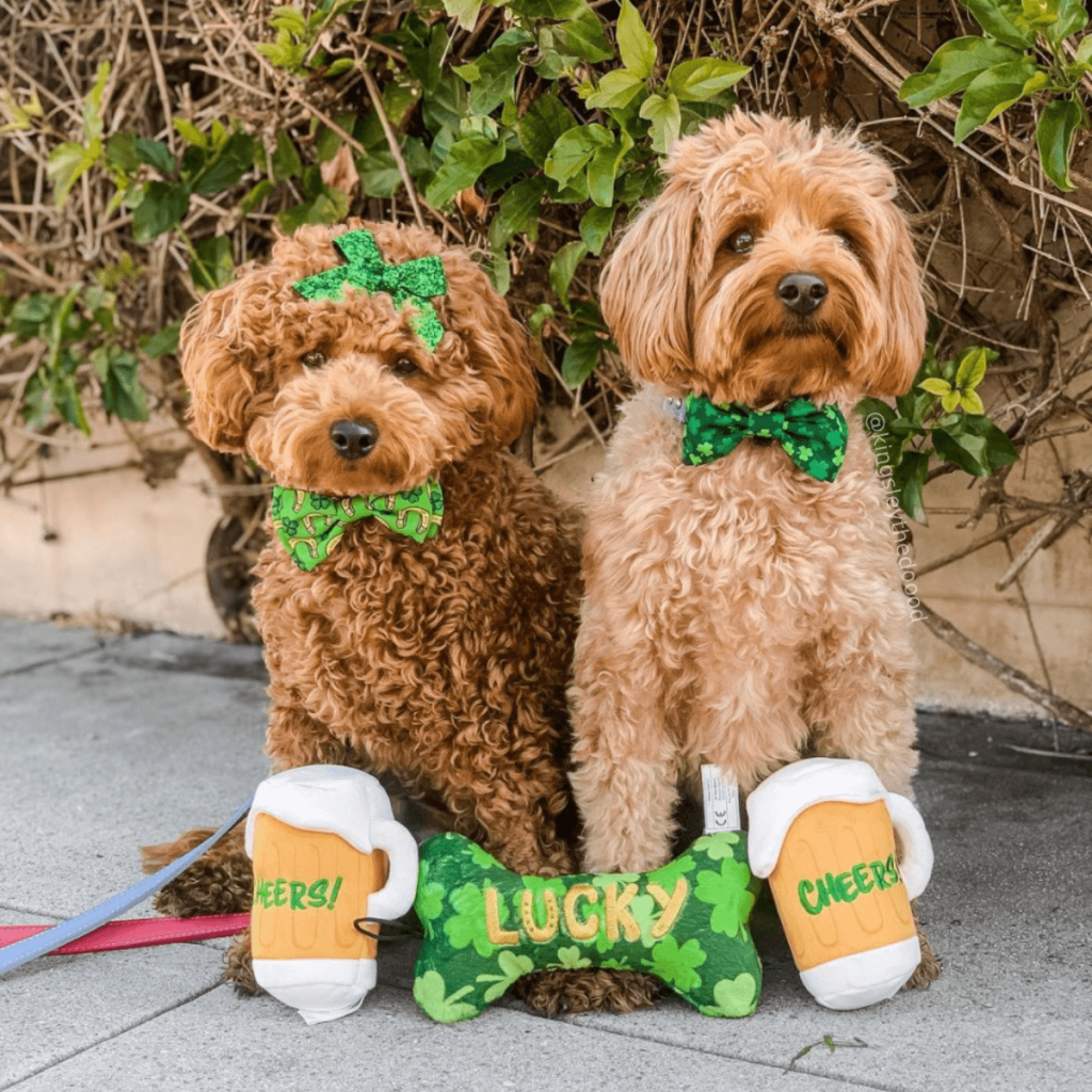 Two brown, curly-haired dogs sit with green Huxley & Kent toys and accessories
